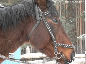 31 января наступает Год Лошади