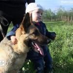 Благотворительная выставка собак