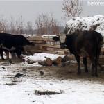 Фермер Виталий Серёгин