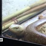 Год змеи по китайскому календарю