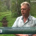 Курташ» пора спасать от лесовозов