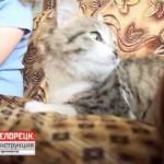 Лечение кошками. Кошкотерапия. Белорецк: инструкция по применению.