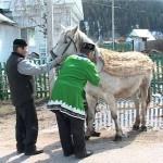 Мастера Белоречья. Ассинский сельский совет