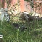 Охотничьи собаки сдали экзамен