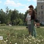 Посадка кустарников на ул.Ленина