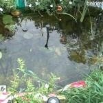 Райский сад Миниахмета Шарипова