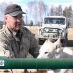Тренировочная станция для охотничьих собак