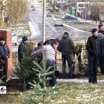 В Белорецке у одной из школ появилась еловая аллея