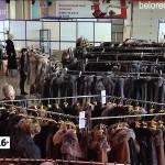 Выставка «Шубы нарасхват» в Белорецке