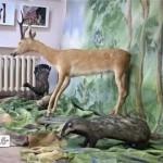 Экологическая выставка в краеведческом музее