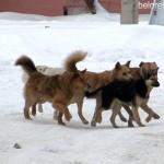 Вакцинация животных против бешенства