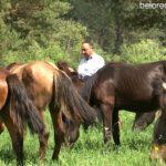 Крестьянско-фермерское хозяйство Аксановых из Сосновки