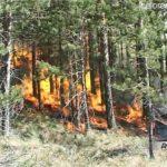 Пожароопасность в лесах нарастает