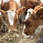 Крестьянско-фермерское хозяйство Харуновых из Кузгун-Ахмерово