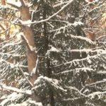 В Башкортостане 2017 год объявлен Годом экологии и особо охраняемых природных территорий