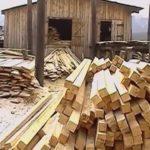 Осужден бывший руководитель Белорецкого лесничества
