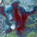 Пропала собака в Заматинском районе