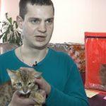 Выставка кошек в краеведческом музее
