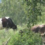 Фермер из Уткалево