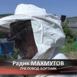 Бортевой мед из Исмакаево