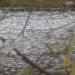 В Н. Авзяне утонул мужчина
