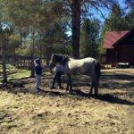 Пропала молодая лошадь серого цвета