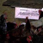 Птичий грипп нельзя допустить