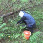 Пропавших в лесу становится больше
