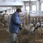Фермер Ильгиз Харунов