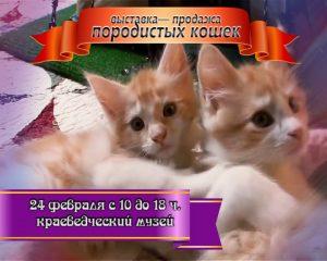 Выставка-продажа кошек @ Краеведческий музей