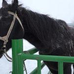 К середине весны все лошади города и района будут промаркированы