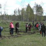 В Белорецком районе появился «Лес памяти тружеников тыла»