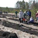 Возле с. Тирлянский посадили «Лес памяти»