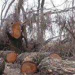 В Белорецке задержали подозреваемого в незаконной рубке леса