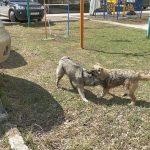 Вопрос отлова бродячих собак урегулирован
