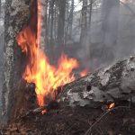 Пожары в период с 27 по 31 мая