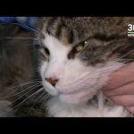 8 августа отмечается Всемирный день кошек