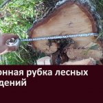 Белоречанин подозревается в незаконной рубке лесных насаждений