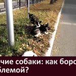 Бродячие собаки как бороться с проблемой