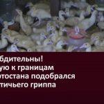 Будьте бдительны! Вплотную к границам Башкортостана подобрался вирус птичьего гриппа
