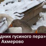 «Праздник гусиного пера» в селе Ахмерово