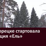 В Белорецке стартовала операция «Ель»