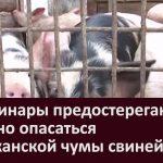 Ветеринары предостерегают Нужно опасаться африканской чумы свиней