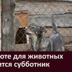 В приюте для животных состоится субботник