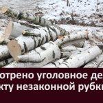 Рассмотрено уголовное дело по факту незаконной рубки леса