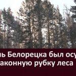 Житель Белорецка был осужден за незаконную рубку леса