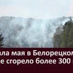С начала мая в Белорецком районе сгорело более 300 га леса