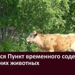 Открылся Пункт временного содержания домашних животных