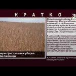Фермеры приступили к уборке яровой пшеницы