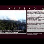 На территории Белорецкого района действуют 4 лесных пожара